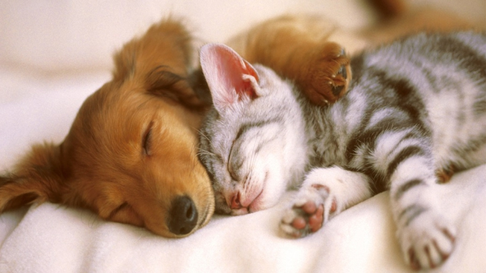 Cute Puppies And Kittens Wallpaper: Doobie, Dooobie, Doobie, Dooobie, Doobie, Quack Quack