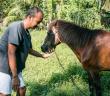 Samui-pony