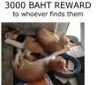 kittens-missing-in-Ban-Tai-Samui